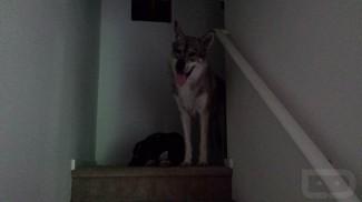 Dogs Lowlight Galaxy S4 (Copy)