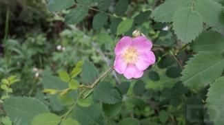 Flower Galaxy S4 (Copy)