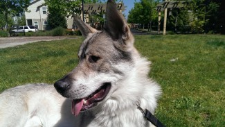 Loki Pup HTC One (Copy)