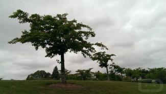 Tree HTC One (Copy)