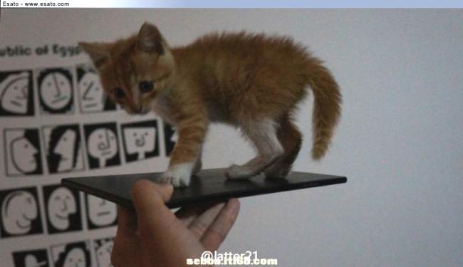 Sony Togari Cat