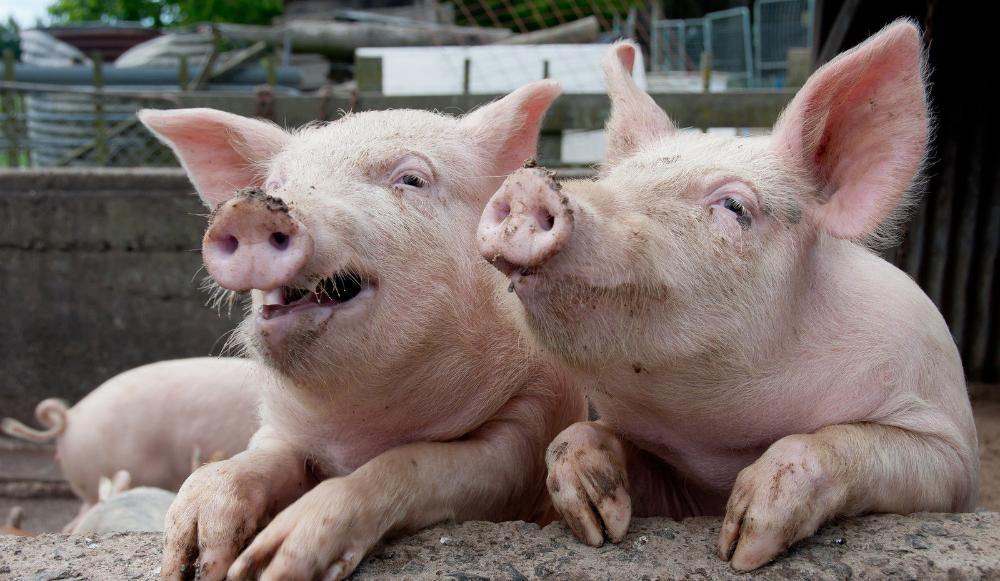 Data Hogs