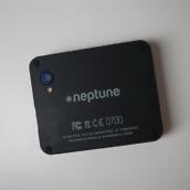 Neptune Pine - 9