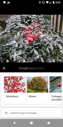 download google lens